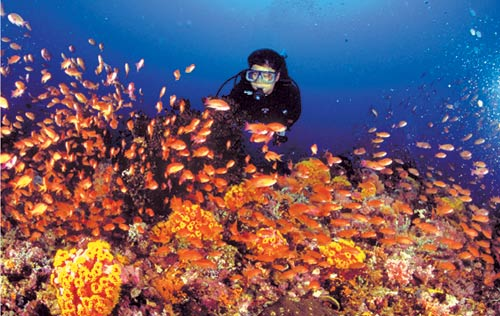 Image result for images of scuba diving in subic bay